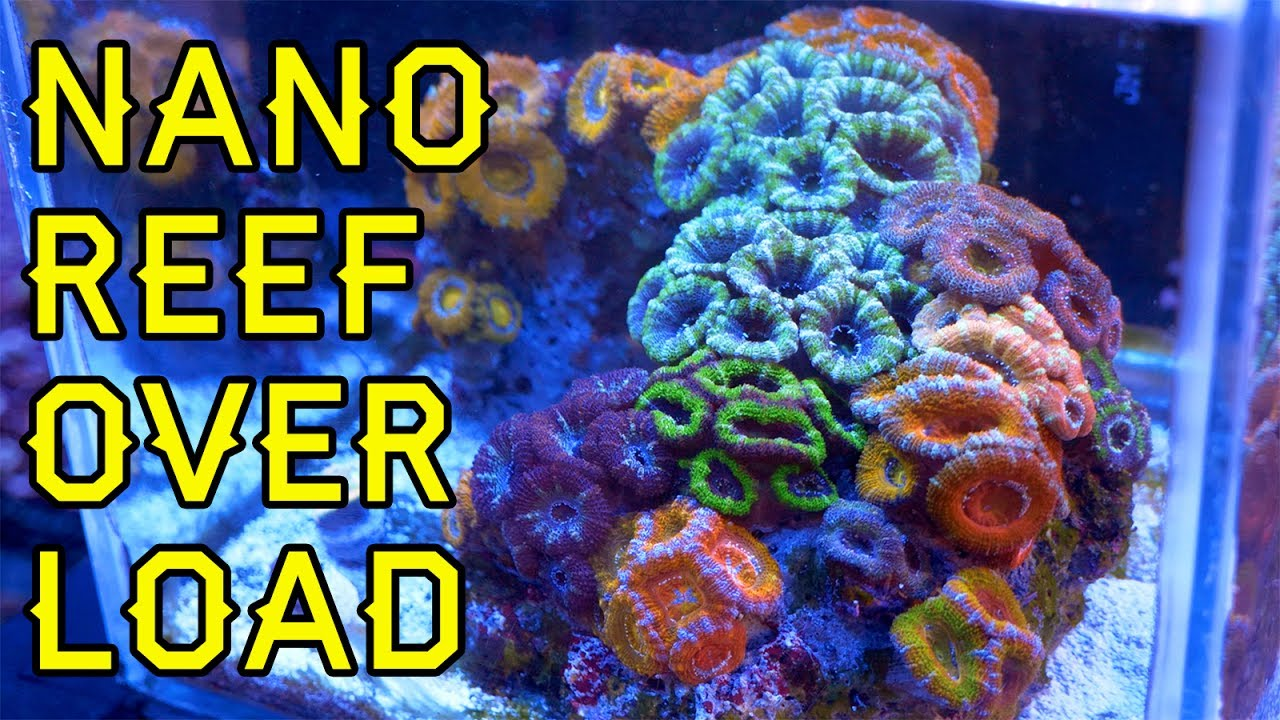 nano reef overload five great nano pico reefs at elite reef