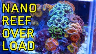 NANO REEF OVERLOAD!! Five Great Nano & Pico Reefs At Elite Reef