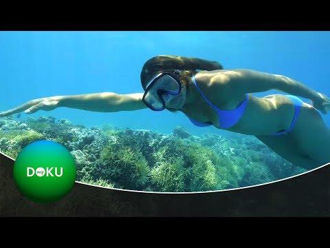 Freitauchen Am Great Barrier Reef | 4K