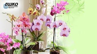 Содержание орхидей в комнатных условиях(, 2017-01-16T13:30:55.000Z)