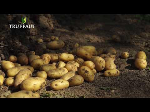 comment cultiver des pommes de terre pr pouss es jardinerie truffaut tv youtube. Black Bedroom Furniture Sets. Home Design Ideas