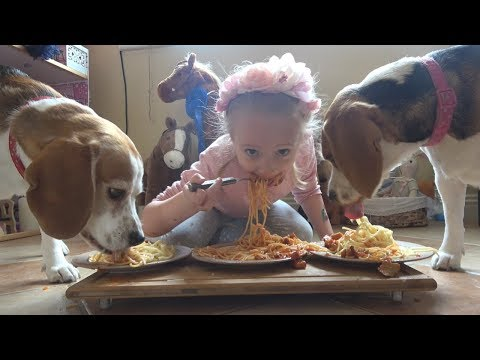 Spaghetti Eating Competition with Cute Beagle Dogs