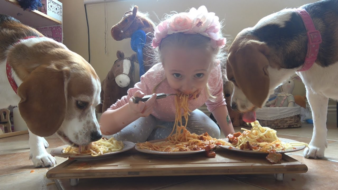 Spaghetti Eating Competition with Cute Beagle Dogs | Charlie the Dog #228