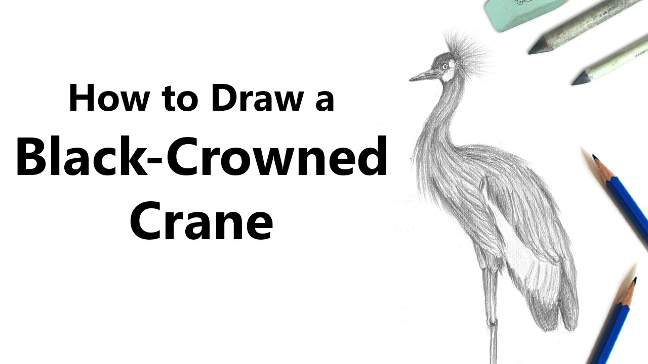 How to draw a black crowned crane with pencil time lapse for How to draw a crane step by step