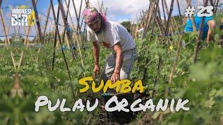 SUMBA PULAU ORGANIK - Ekspedisi Indonesia Biru #23