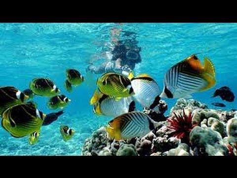 Hanauma Bay, Oahu, Hawaii, snorkeling with kids and friends, Yeh