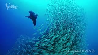 Scuba Diving Adventure