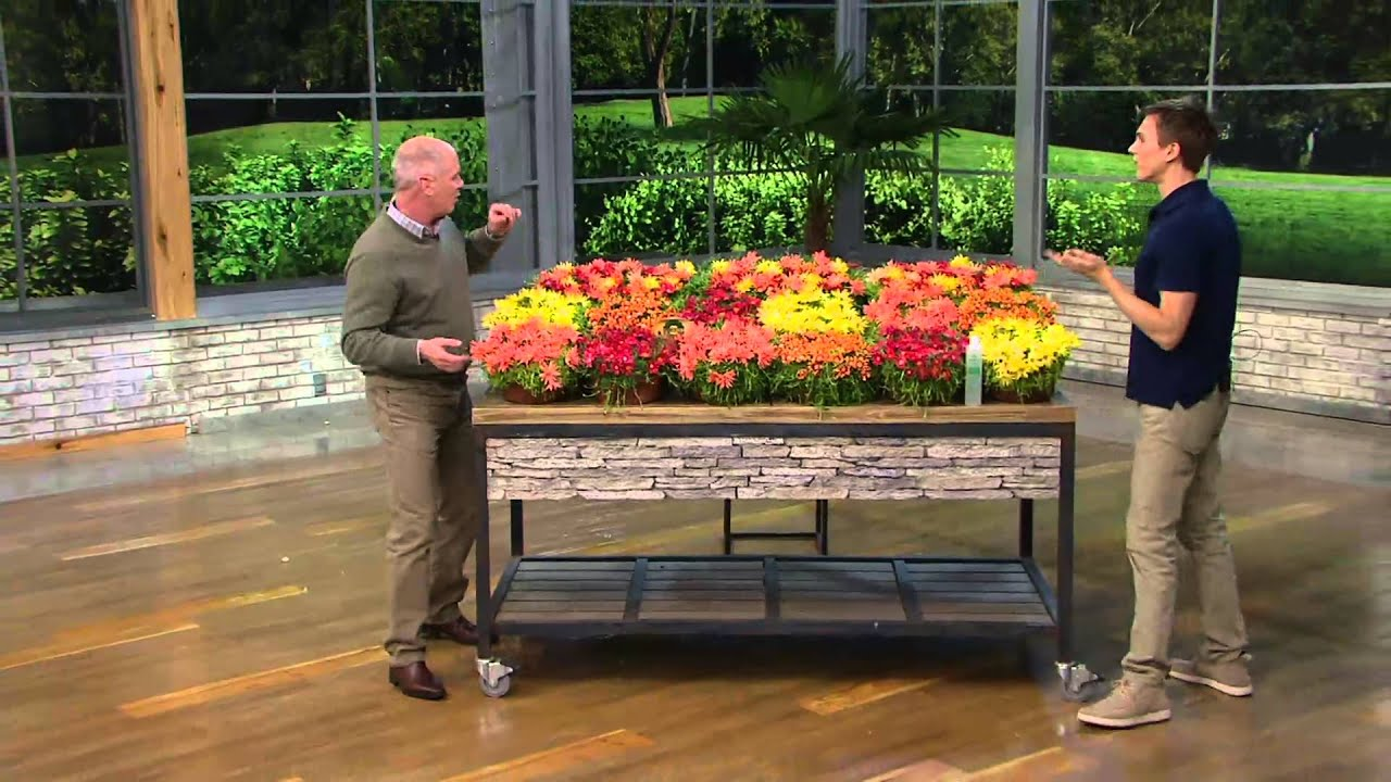 Robertas 18piece Hardy Succulent Flowering Ice Plants on QVC