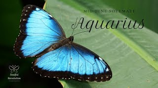 one moment of truth aquarius mid june soulmate