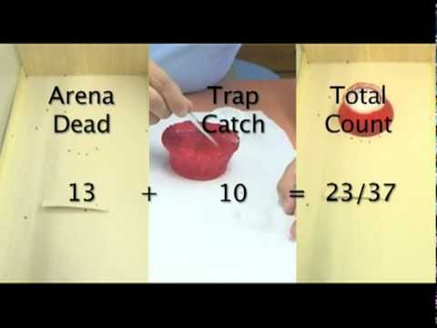 Bed bug trap volcano pitfall youtube bed bug trap volcano pitfall ccuart Choice Image