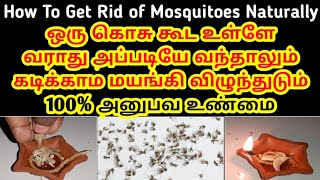200% Working எவ்ளோ கொசு செத்துருக்கு பாருங்க How to get rid of mosquitoes