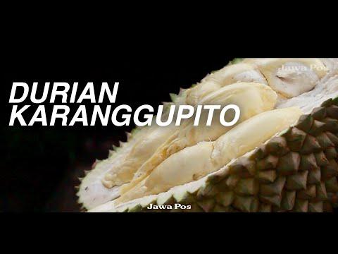 Jawa Pos Belah Durian Episode 17: Durian Karanggupito Ngawi