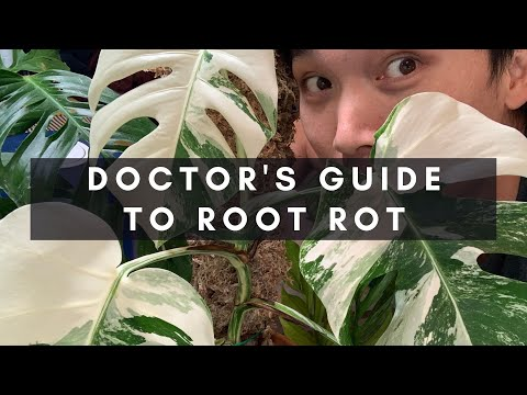 A Doctor's Guide To Root Rot - How To Manage And Treat (With Secret Step #4) | Ep 14