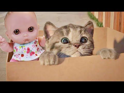 Куклы Пупсики Играют в Игру как мультик Бездомный МАЛЕНЬКИЙ КОТЕНОК. Видео для детей. Зырики ТВ