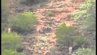Save Urial in pakistan