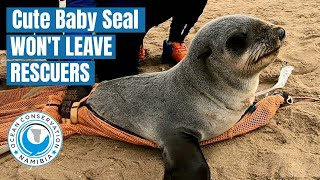Cute Baby Seal Won't leave His Rescuers!