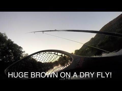 Feeding Frenzy - Dry Fly Fishing In The Catskills