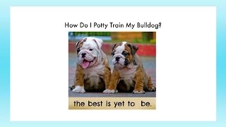 How To Potty Train An English Bulldog | How to Potty Train Your Bulldog Puppy | House-training Tips