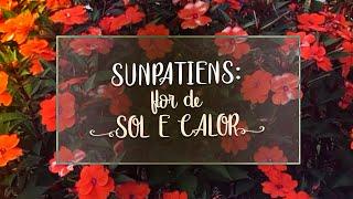 A Flor Perfeita Para Sol E Calor – Aprenda a Cultivar