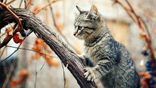 Милые котята..МИ-МИ-МИ...)))