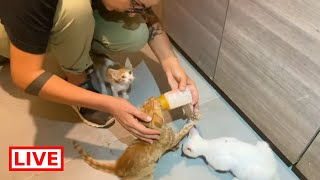 The cat with he broken jaw is doing well after the operation - Takis shelter