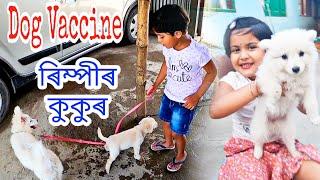Dog Vaccination , ৰিম্পীৰ কুকুৰক বেজি দিলো , Telsura Video , Suven Kai Vlog