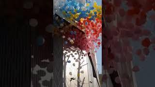 대구 풍선날리기  헬륨 릴리즈 행사 장식