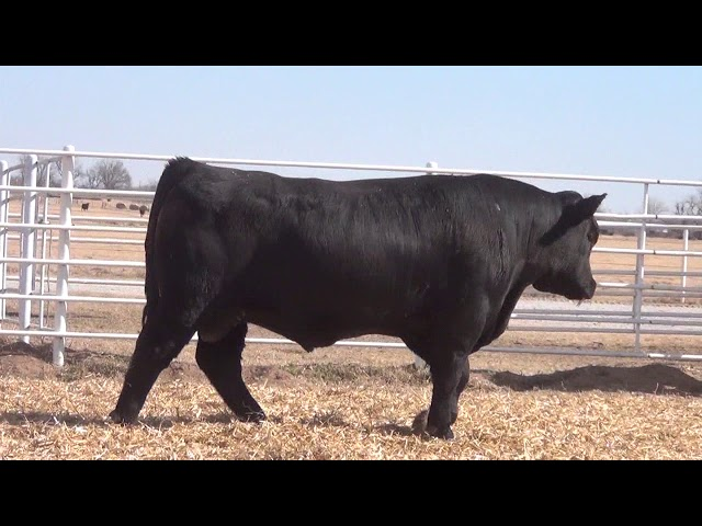 Express Ranches Lot 385