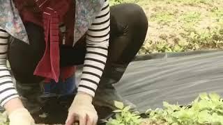 아기농부의 귀농이야기 1탄 유기농복분자 잡초와의 전쟁