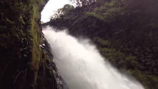 видео Перуанская олуша