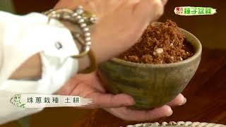 種子盆栽DIY教學 - 珠蔥四種法