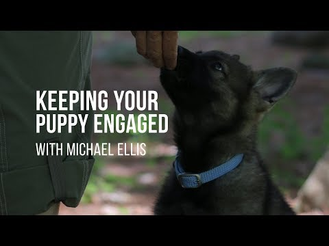 michael-ellis-on-the-importance-of-keeping-your-puppy-engaged