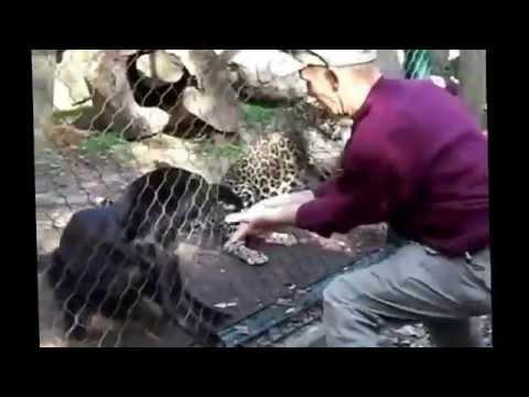 Feeding Zoo Animals - Fail