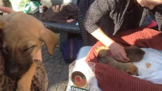 """Щенки! Помощь животным! Приют для бездомных животных Днепра """"Ковчег!"""" Акция по сбору средств"""