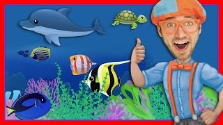 connectYoutube - Story Time with Blippi | Treasure Chest