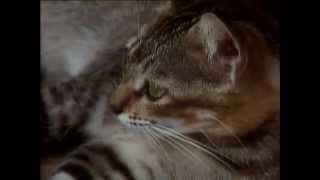 BBC Koshki 3 2002 XviD DVDRip