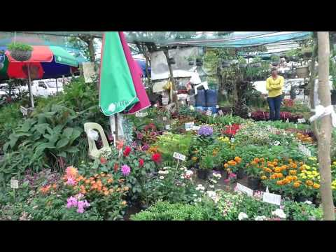 Philippines, Tagaytay, street vendor selling flowers near Mahogany Market