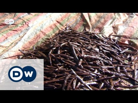 The scent of vanilla | DW Business