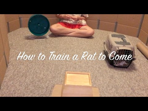 How to Train a Rat to Come