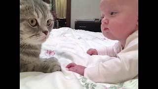 Сериал Уроки кошачьего выживания. Урок 1