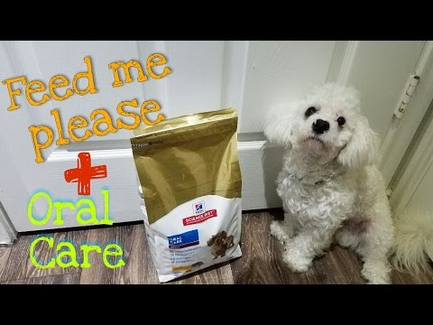 hill-science-diet-dog-food-review-|-dexter---adventure-of-a-maltipoo