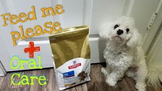 Hill Science Diet Dog Food Review | Dexter the Toy Maltipoo