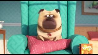 Das Geheime Leben der Haustiere Offizieller Trailer 1 2016 Louis C K Animierten Film HD