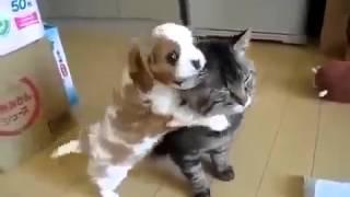 Чудные кошки, Прикольщики!!!!