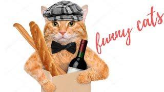 Смешное видео с котами. Приколы с котами . КОТ ГОТОВИТ БОРЩ