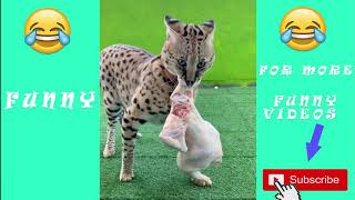 🤣funny pet videos - try not to laugh😻  - check out these funny animals!