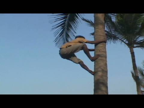 India's coconut climbers