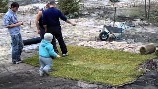 рулонный газон укладывает Владик 2.5 года(, 2013-11-09T06:09:30.000Z)