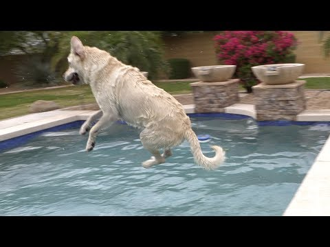 DOGS SWIMMING IN SLOW MO!!