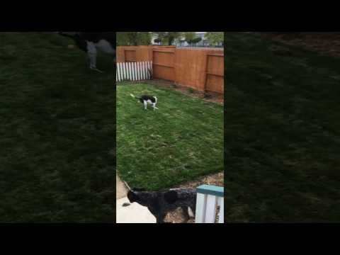 Dax the yard surveyor!